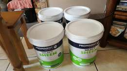 20L top quality paint interior and exterior sheen