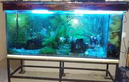Beautiful large tropical fish tank