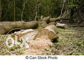 tree felling and rubbish removals Bethal - image 1