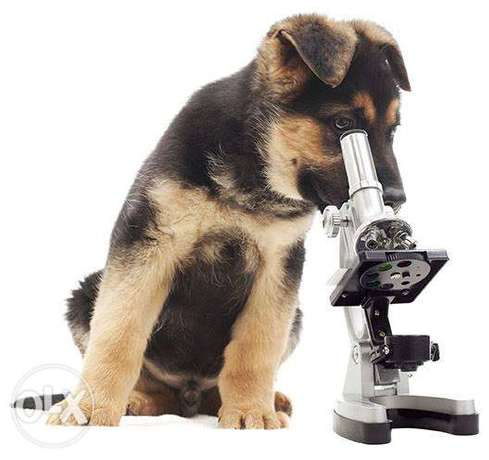 microscope work available at Jungle pet clinic