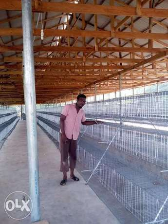 Galvanized local fabricated cages Ijebu Ode - image 7