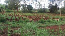 Quick sale 1/4 acre kamiu estate EMBU town.