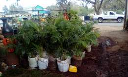 We sell all kind of grass,flowers,pots,gardening,landscaping,maintenac