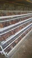 Layers cage for 2000 chicken.