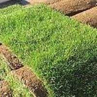 top quality instant lawns supply and install.