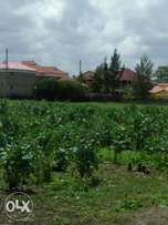 100*100 plot for sale in syokimau