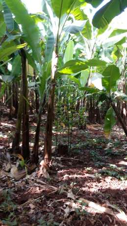 Maragwa a prime 2 acres with banana and trees Mbugua - image 1