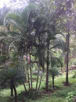 Cycads and Palms