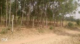 Plot with trees instalments acceptable quick sale