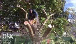 Professional Tree Felling and Bush clearance
