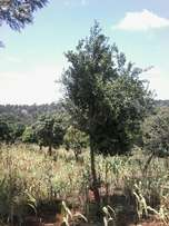 1574 acres for sale in outskirts of nakuru town ksh 2.8m per acre