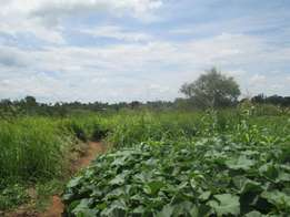 Land on sale 70Acres with a land tittle in GULU town