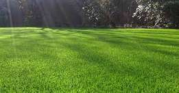 we are the suppliers of all types of grass lawn we are the farm supply