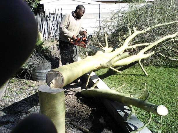 The bush clearing team Brackenfell - image 5