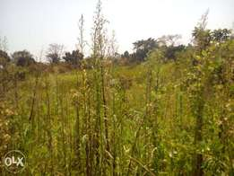 300acres of millo land with title on sale in kiboga each is at 3m