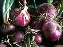3tns RED BULB ONIONS at ksh 46 per kg