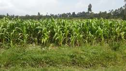 Selling 1/2 an acre of land at a pocket friendly price