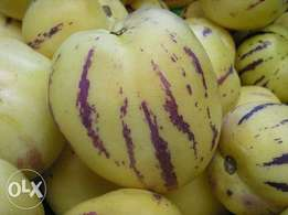 Pepino melon seedlings.. Quick Delivery. Call Patrick