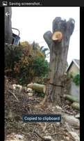Tree felling and pruning