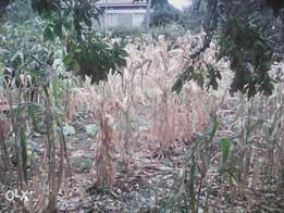 1/8 acre for sale in Ongata Rongai
