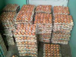 Chicken eggs affordable