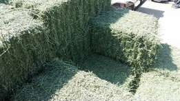 Lucerne Bales For Sale