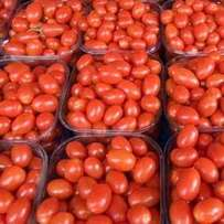 We supply Fresh tomatos all year round
