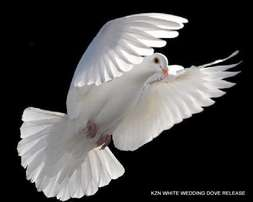 White Pigeon release for all occasions