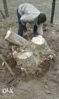 Knowle Tree services- Stumps removal & level the hole.