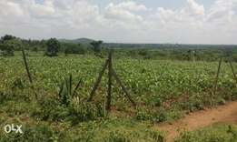 Land in siaya County just 2kms a way from town (Awelo). 60m by 80ms.