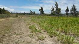 very prime 1 acre land for sale in Ndeiya Githarane