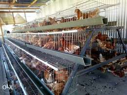 Chicken cages for layers