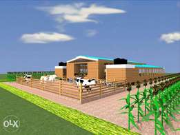 dairy cow shed plans at 9k