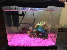 Boyu Led fish tank for sale