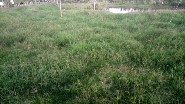 6 acres for sale in Migingo Kaplong Chebole - image 2
