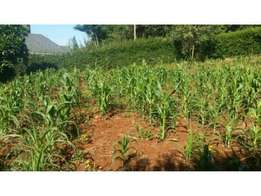 Quarter acre plot for sale kahawa sukari off nyahururu rd
