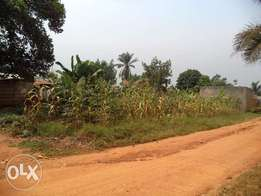 Land for sale in a developed neighbourhood 50 decimals