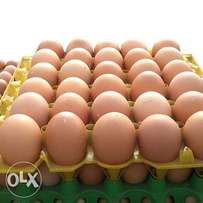 Healthy Fresh Raw Eggs from Farm
