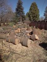 Build Direct Tree Felling and Garden Services we a the best try us