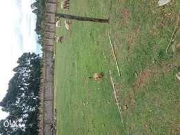 1/4 an acre plot on sale at Annex basuri estate in eldoret .