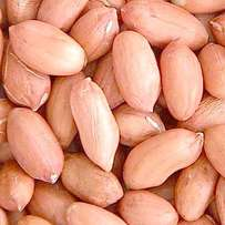 We are Suppliers of Barley Grain. Wheat , peanuts , Cashew nuts , Sorg