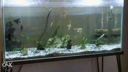 Fishtank with fish,plants,pumps and decorations