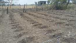 50 x 100 land for sale btwn kiserian and ngong 200m from main tarmac