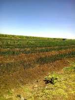 rumuruti has 12820 acres of fertile land with lots of water