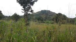 20 acres of land on sale in kasana luweero