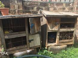 dog chicken poultry house
