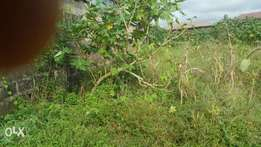 Land for sale in Maryland Enugu state.