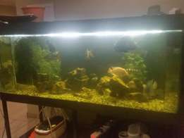 2m 1000 liter Tropical Tank for sale