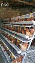 Layers cage for 256chiken at only kes65000