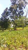 1/2 acre land for sale in Ngong.